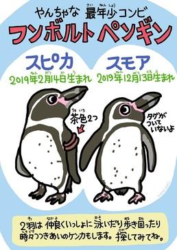 スピカとスモア_ペンギン.jpg