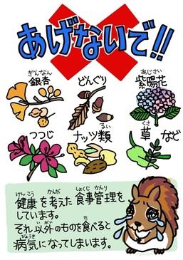 agenaide_risu_2.jpg
