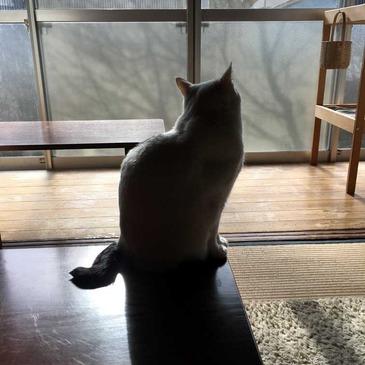 oku-shinoke_201712_3.jpg