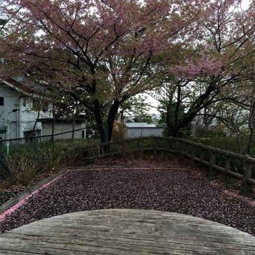 shimauma-no-miwakekata_0.jpg