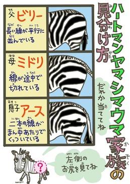 shimauma-no-miwakekata_1.jpg